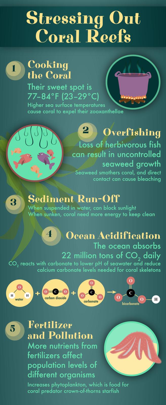 Behind Coral Reef Bleaching